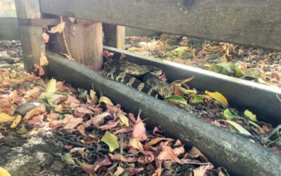 How to Keep Rattlesnakes Out of Your Yard